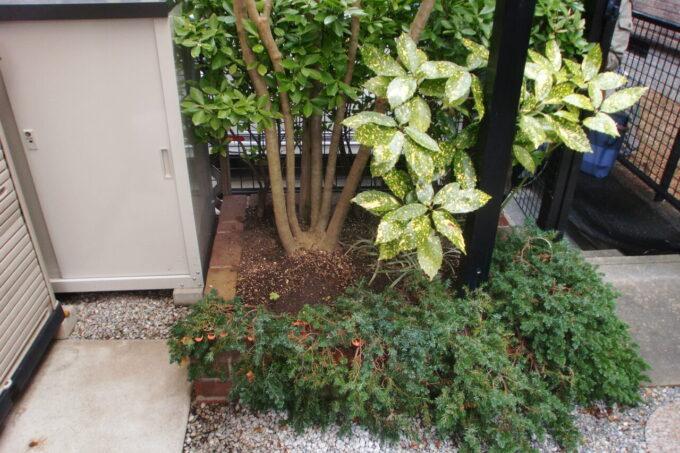 画像:M様邸 外部水栓移設前の庭の写真